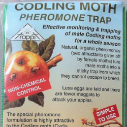 Codlin Moth Front-214-915-592